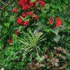 jardines verticales andalucia
